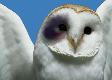 White-Owl-of-TruthwithBlackEye02
