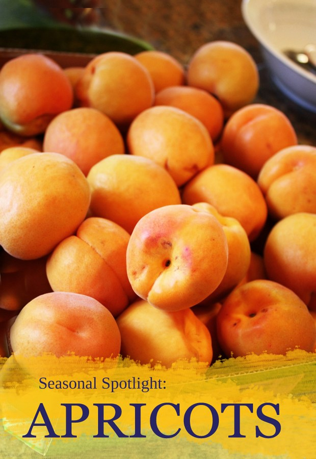 Seasonal Spotlight: All About Apricots