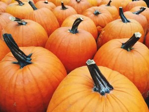 Halloween Outreach Ideas to Liven up Your Event