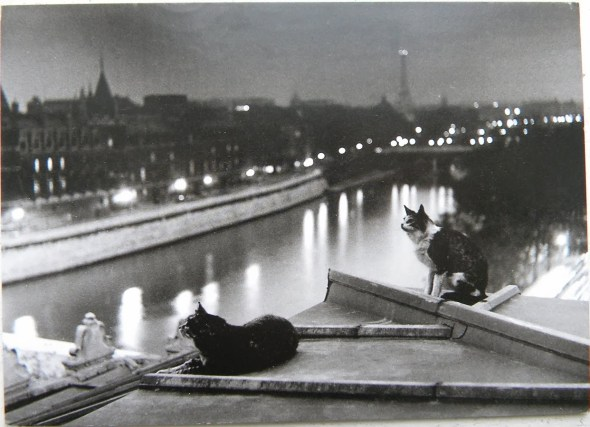 Paris Cats at Night, 1954 Robert Doisneau
