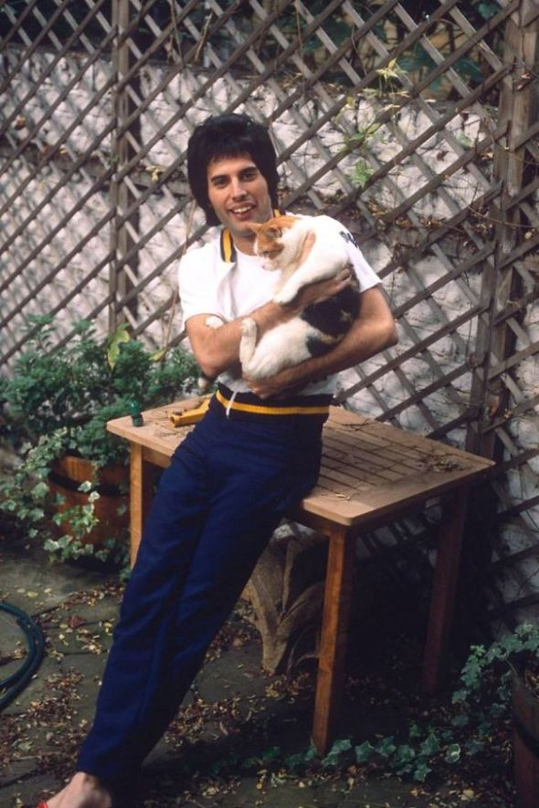 Freddie Mercury and Cat