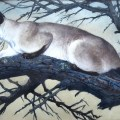Stalking Siamese Cat, Charles F. Tunnicliffe