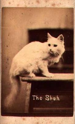 Brighton Cat Series Pointer The Shah, Harry Pointer
