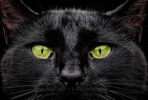 Green eyed black cat, Jerome K. Jerome