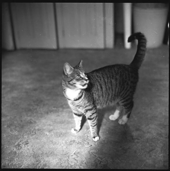 Walker Evans, Tabby Cat 2