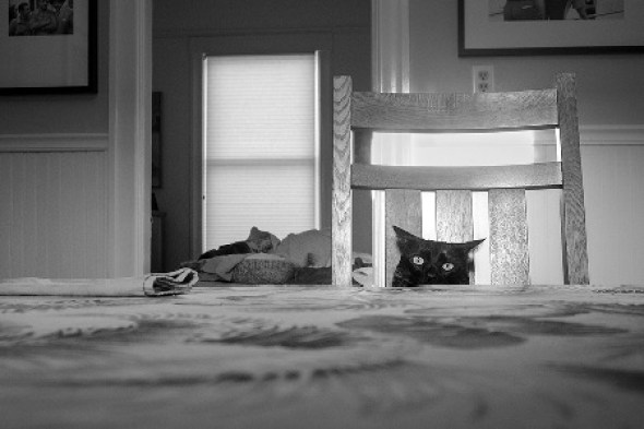 Dianne Woods, Black and White Cat Photo