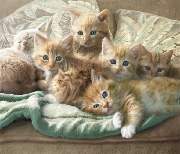 Dianne Woods, Kittens
