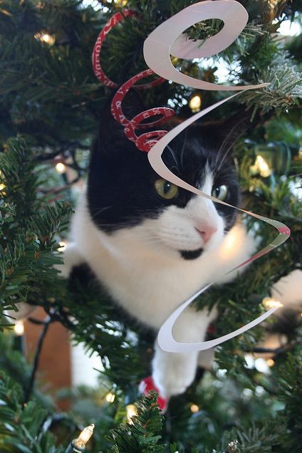 Christmas Cat Sitting in a Tree