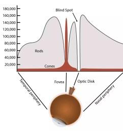 rods and cones diagram [ 1500 x 1416 Pixel ]