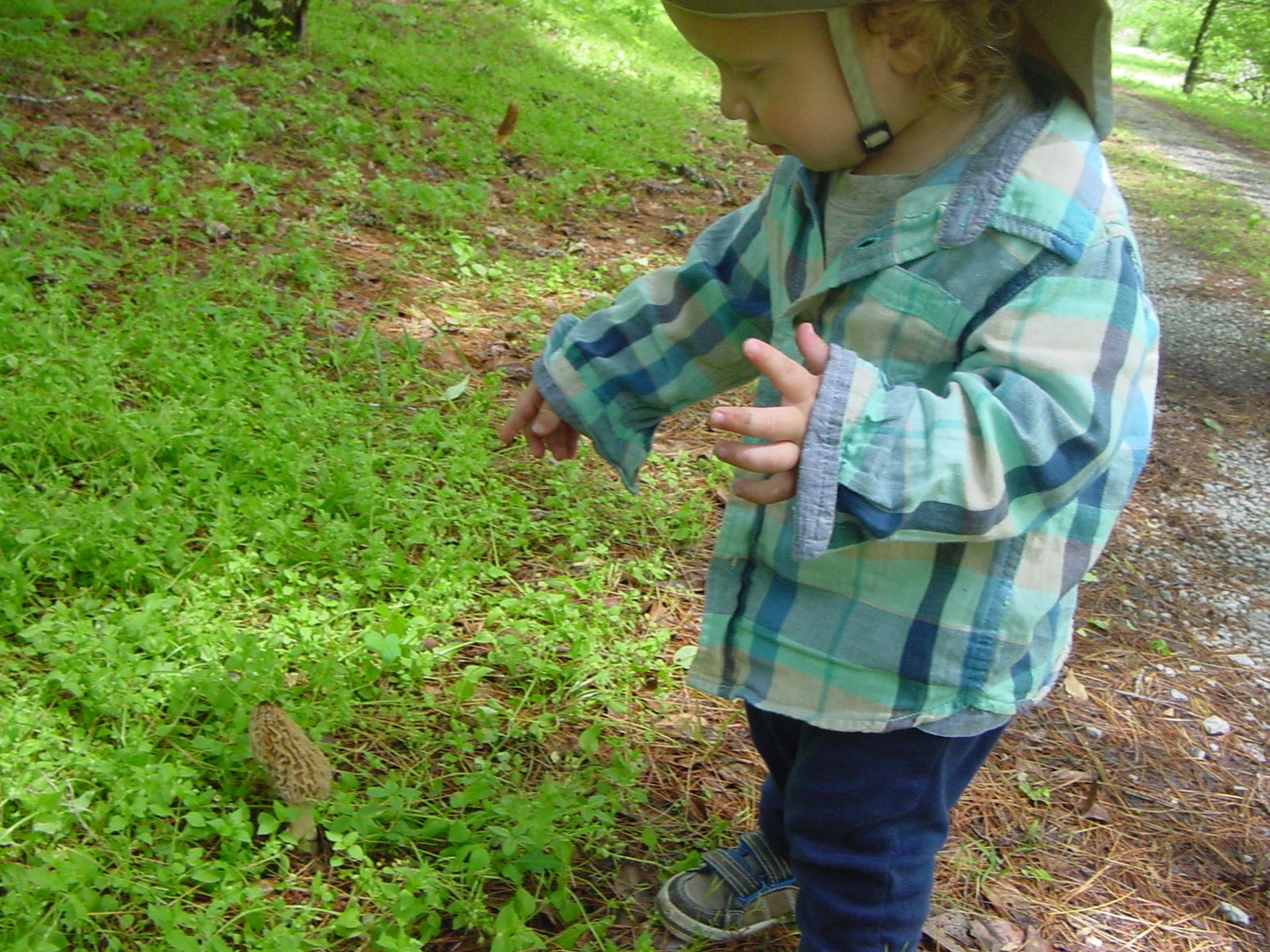Morel Hunting in Tennessee