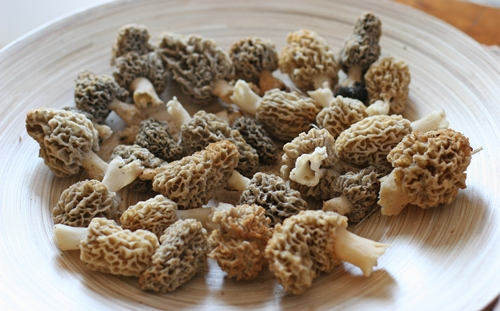 Plate of Morels