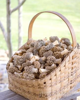 Basket of Morels