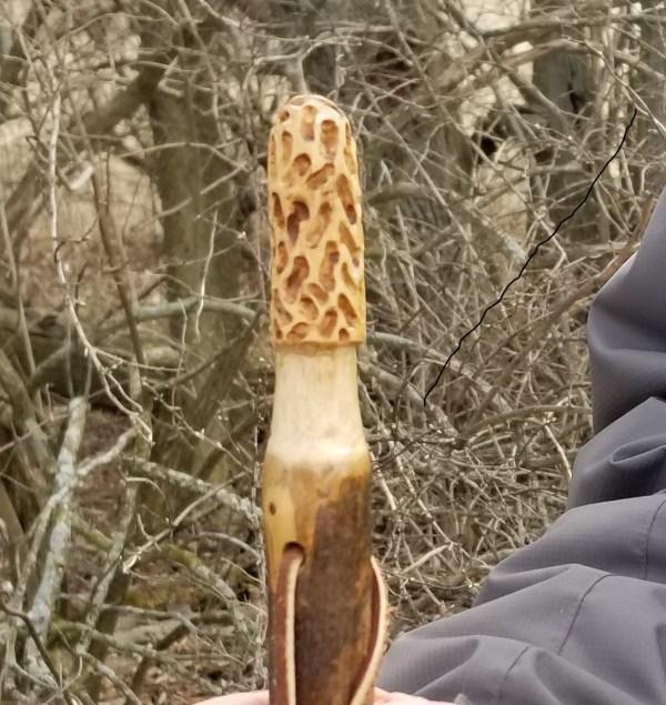 Morel Hiking Stick Hickory