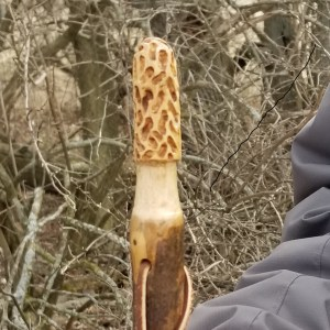 Morel Hiking Stick Hickory
