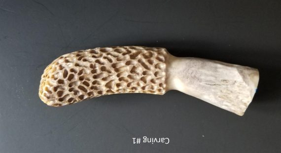 Morel Carving #1