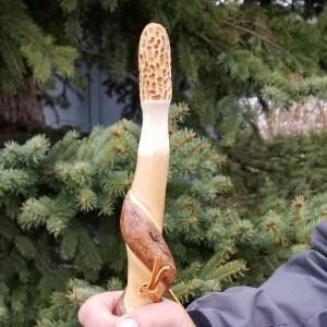Morel Hiking Stick #3