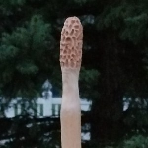 Morel Hiking Stick #5