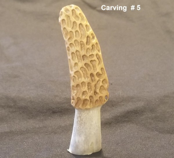 Morel Carving #5