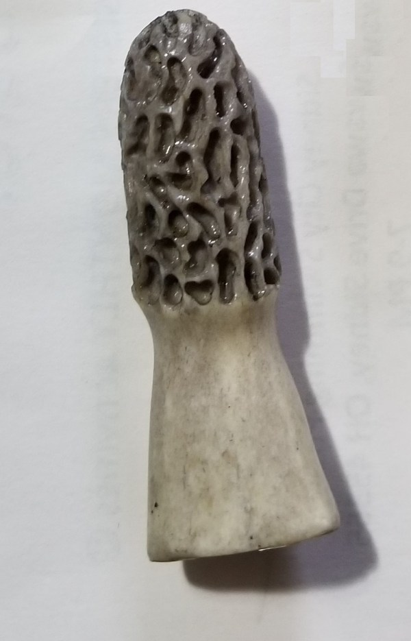 Morel Magnet Grey