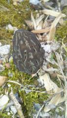 MD_BryansRoad_20200317_morel (Large)