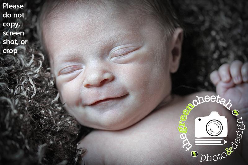 the green cheetah photo&design newborn session