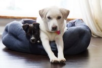 Eco-Friendly Dog Beds - Feel Good About Your Pet's Bed!