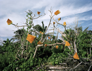 fotografo-faz-arte-lixo-achado-reserva-natural-sian-kaan-alejandro-duran-7