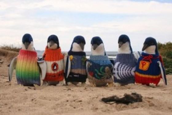idoso-109-anos-tricota-casacos-pinguins-ameaçados-extincao-2