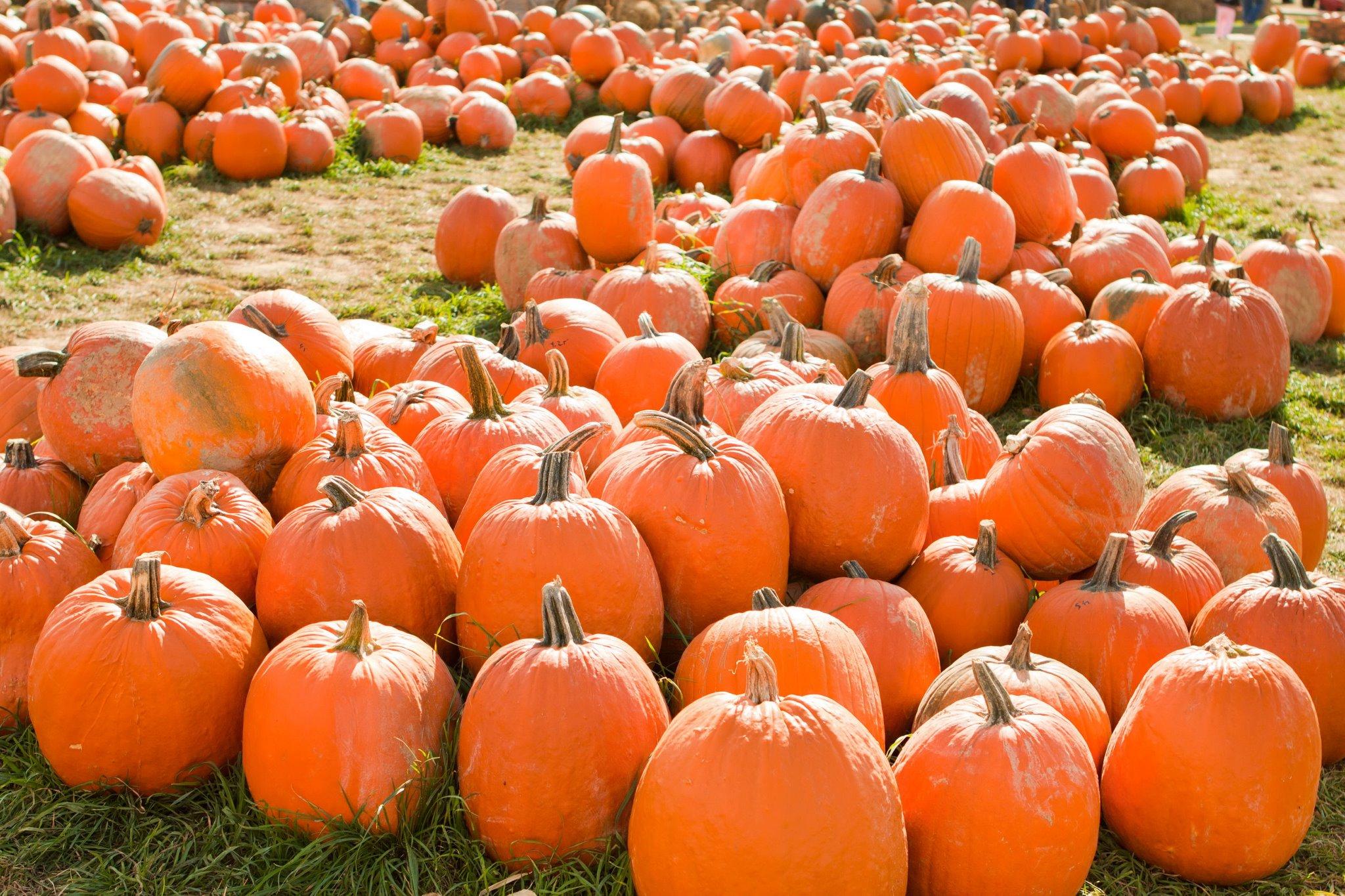 Nickajack Farms Fall Festival & Pumpkin Patch: