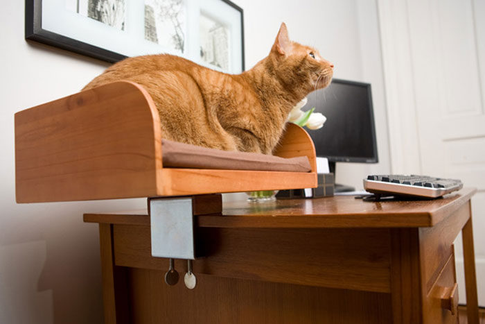 KitIn Box  Desktop Cat Bed