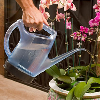 Enki Oxygenating Watering Can  The Green Head