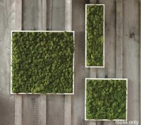 Fern And Moss Wall Art - The Green Head