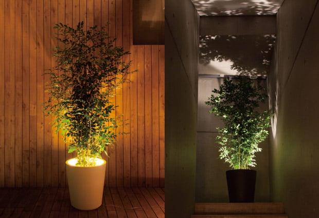Forestarium  Illuminated Planter