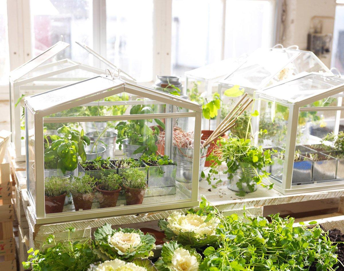 Plant Ikea Socker Stand