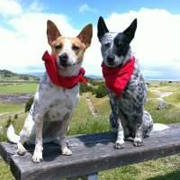 Insect Shield Dog Bandana - The Green Head