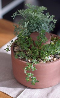 Self-Watering Herb and Succulent Planter - The Green Head