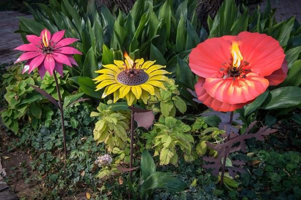 steel poppy sunflower and dahlia