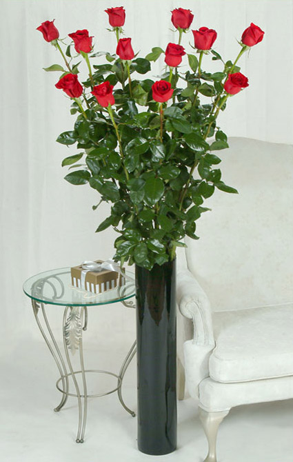 One Dozen of the Worlds Tallest Roses