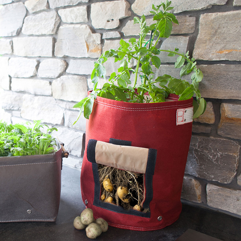 Image Result For How To Plant Vegetables In A Planter Box