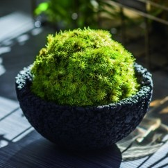 Kitchen Cooking Games Valances Ideas Eco Pochi Kokedama Moss Ball Pot - The Green Head