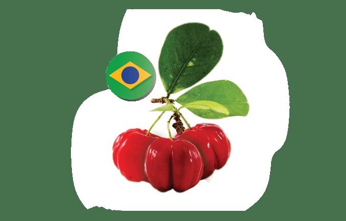 The Green Labs LLC.   Organic Acerola Powder Extract 25% Vitamin C on organic cocoa, organic kiwi, organic honey, organic pineapple, organic watermelon, organic catnip, organic lavender, organic rosemary,
