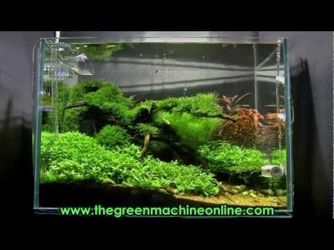 Aquascaping Articles Tutorials Videos The Green Machine Blog