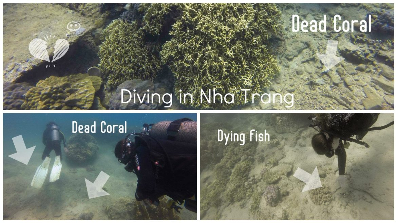 scuba diving nha trang plngee nha trang