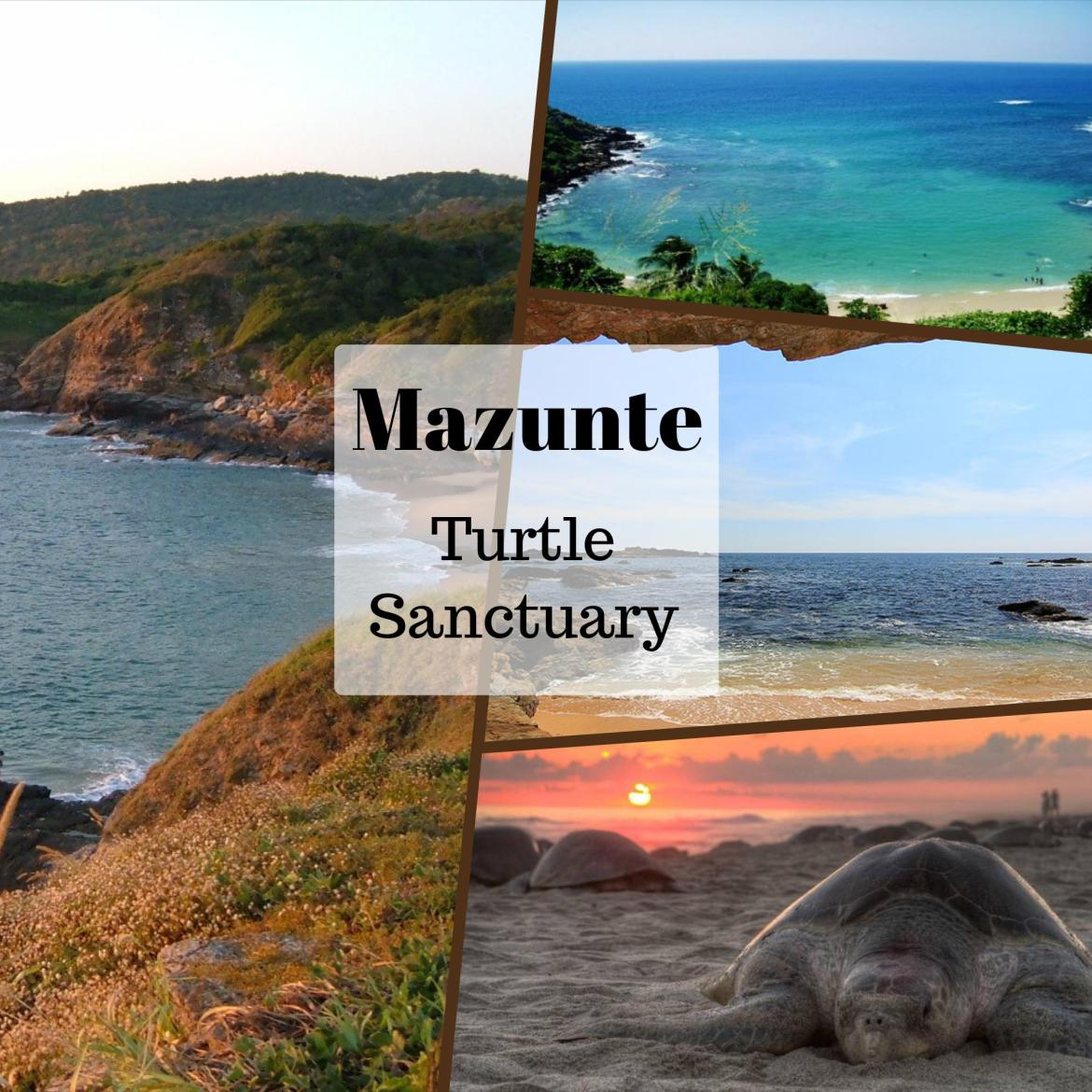 turtle sanctuary mazunte oaxaca mexico places to visit ecotourism conservation