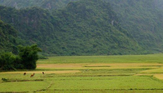 3 semaines d'itinéraire au Vietnam