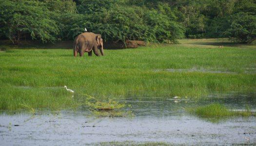 Sri Lanka: Circuit de 3 semaines à vélo