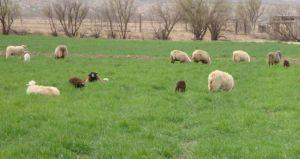 our green farm