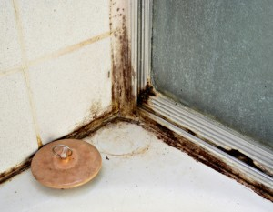 prevent toxic tile and grout mold