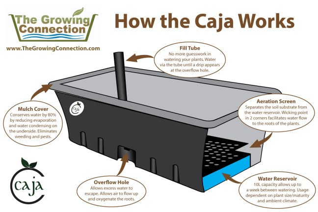 How-the-Caja-Works
