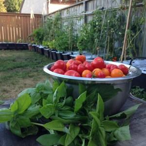 backyard caja garden harvest